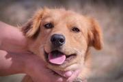 Собачка Люся из приюта Хвостатый Рай