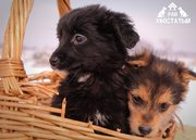 Привитые щенки из приюта Хвостатый Рай